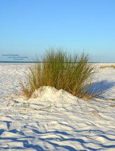 I Love the soft powdery Siesta Key Sand between my toes!!! <3   come by and visit us on facebook!  Sarasota Photography