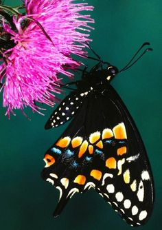 Butterfly on flower via Carol's Country Sunshine on Facebook