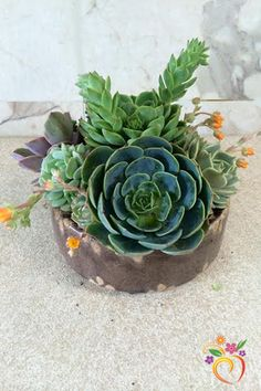 This succulent dish garden makes a great gift for the special person in your life. Each one comes with unique succulents packed to the brim in our small dish vase. Looks amazing on a desk or next to y