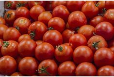 Pour augmenter la fertilité masculine, mangez des tomates