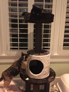 One of our customers sent this picture of their cat enjoying their new cat three…