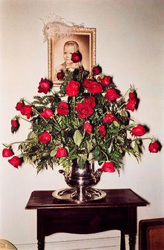 William Eggleston, Untitled (Roses), 1970-1973