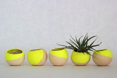 HOME | Yellow planters