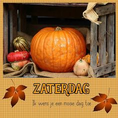 Pumpkin Images, Day Wishes, Vegetables, Qoutes, Quotations, Quotes, Vegetable Recipes, Quote, Shut Up Quotes