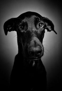 way to take photo of pet