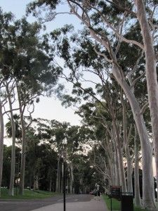 Urban Aboriginal tours in Sydney, Perth and Melbourne » Did you know you can experience Aboriginal culture in an urban setting? David from Grumpy Traveller talks about some great indigenous tour operators in Australia.