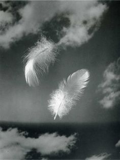 Andreas Feininger:(when you see a feather there is an angel close by) Studies of the Structure of Natural Objects. Thank you, firsttimeuser. Natural Structures, I Believe In Angels, Feather Art, Watercolor Feather, Angels Among Us, White Feathers, Deviant Art, Black And White Photography, Art Photography