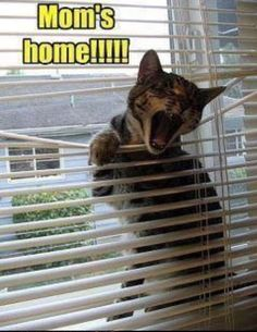 My cats def do this!