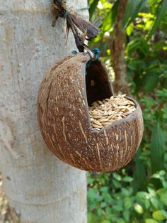 Natural Coconut Shell Pot Holder Plant Hanger Hanging Planter Basket Rope CraftNatural Coconut Shell Pot Holder Plant Hanger Hanging Planter Basket Rope CraftTurtle Shell From CoconutTurtle Shell From Coconut: 6 Steps (with Pictures)Bird feeder using Homemade Bird Feeders, Diy Bird Feeder, Coconut Shell Crafts, Wood Crafts, Diy Crafts, Bird Toys, Diy Embroidery, Garden Crafts, Creative Decor