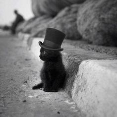"""Cat in a Hat. """"Why fit in when you were born to stand out?""""— Dr. Seuss  Black cat in top hat"""