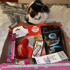 Jodie is scoping our her treats in this months #Purrfectbox! #cats #cute #kitty #cat #catproducts #toys #cattoys #purr