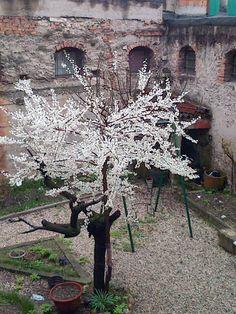 La vita è potente!  http://www.carlafavazza.it/blog/54-vitapotente.html