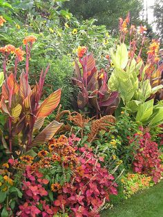 love the color matching with the canna lilies & other plants