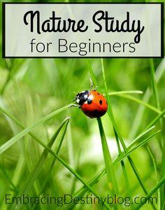 Tips for nature study for beginners. How-to for homeschoolers. embracingdestinyblog.com