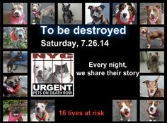 TO BE DESTROYED - 07/26/14 PITTIES ARE IN DANGER AGAIN. THERE ARE FAR TOO MANY TODAY!!! ALL THESE DOGS COUNT ON US!!! LET'S NOT LET THEM DOWN!!! PLEASE OPEN YOUR HEARTS AND PLEDGE, TAKE THEM HOME, BUT BE QUICK AS TIME IS TICKING AWAY. PLEASE BE QUICK WHEN MAKING UP YOUR MIND!!!  https://www.facebook.com/media/set/?set=a.611290788883804.1073741851.152876678058553&type=3