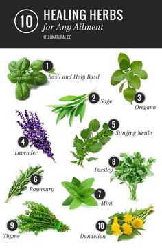 10 Healing Herbs List for Any Ailment #DIY #health #homeremedie