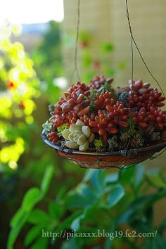 succulents in a hanging dish garden