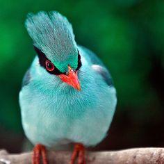Photograph Blue Bird by Ahmad Al Zarouni on 500px