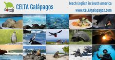 CELTA Galápagos - Teach English in South America  Our next courses run from:     8 June to 3 July 2015     6 July to 31 July 2015     3 August to 28 August 2015  Please visit http://www.celtagalapagos.com/ for more info.