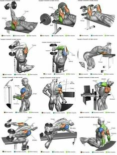 If you want big arms you need to make sure you hit your triceps. Many new trainers don't realise that the tricep is actually bigger than the bicep muscle. Having big triceps will make your arms look much bigger t Fitness Workouts, Weight Training Workouts, Gym Workout Tips, At Home Workouts, Body Workouts, Lifting Workouts, Dumbbell Bicep Workout, Bicep And Tricep Workout, Gym Workouts For Men