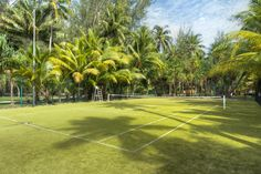 What should you do if you ever get lost in the jungle? Make a tennis court.