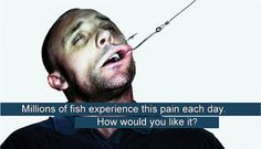 Our planet theirs too animal rights stop animal for Do fish feel pain