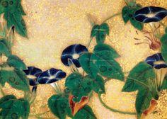 伊藤若冲 Ito Jakuchu 金刀比羅宮 Kotohira-gu shrine 花丸図 朝顔(アサガオ) Hanamaru-zu(Various Flowers) Morning glory