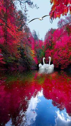Beautiful Photos Of Nature, Nature Photos, Amazing Nature, Beautiful Birds, Beautiful Gardens, Beautiful Places, Beautiful Pictures, Nature Nature, Beautiful Landscape Wallpaper