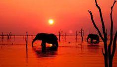Muy buenas tardes aquí el Horóscopo del 8 de Enero de 2016  al 15 de Enero, con las más bellas imágenes de Botswana. Un abrazo, mucha suerte. Adriana Salomón. Un feliz año nuevo para toda mi gente que me lee alrededor del mundo, mis más sinceros deseos para este 2016.