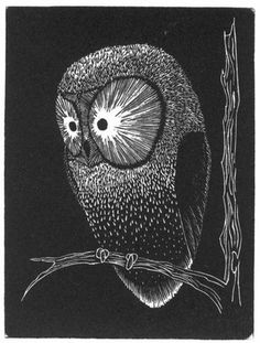 Animalarium: Sunday Safari - The Night Watchers