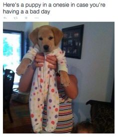 """Here's a photo of a puppy in a onesie in case you're having a bad day."""