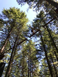 tree to tree park ga