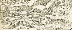 A 16th century illustration of a rat king. - The Complicated, Inconclusive Truth Behind Rat Kings