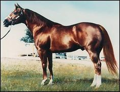 Genuine Doc, 1977 by Doc Bar. Sire of the great Shining Spark among other Hall of Fame, Superhorse and World Champions in Performance and Halter Quarter Horses, American Quarter Horse, All The Pretty Horses, Beautiful Horses, Reining Horses, Dressage, Horse Barns, Horse Stalls, Cutting Horses