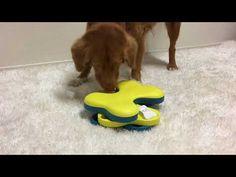 Nina Ottosson Dog Toys Shop - DOG TORNADO - NEW