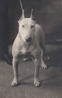 1900 colección C.H.