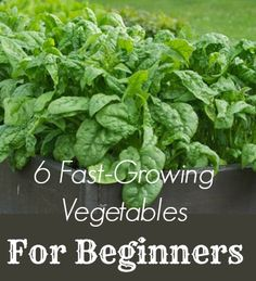 Gardening requires patience, but patience can be demoralizing for new gardeners. These six speedy veggies will go from garden to plate in just over a month.