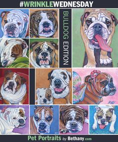 It's Wrinkkle Wednesday: Bulldog Edition! Some English Bulldogs from past cat custom painted pet portraits in acrylic on canvas from Pet Portraits by Bethany.