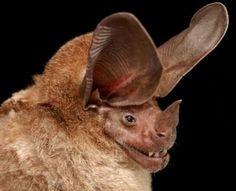 50 видов летучих мышей - Интересное из Сети