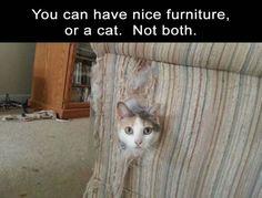 https://www.facebook.com/Brat-the-Cat-112705392220715/