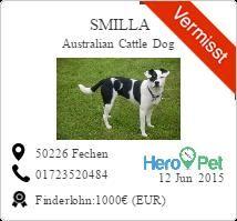 Smilla/Australian Cattle Dog/vermisst