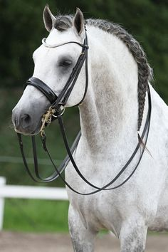 The Premiera Prades is the ultimate double bridle. Stunning leather, a wide soft patent leather noseband, a dazzling curved bling browband, and near invisible closures make this a spectacular competit