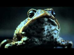 Ford Australia: Cane Toad Road