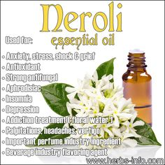 ❤Neroli essential oil is widely used in aromatherapy - being indicated to ease stress, anxiety, and depression, and to increase circulation. Neroli Essential Oil, Essential Oils For Anxiety, Essential Oil Uses, Doterra Essential Oils, Young Living Essential Oils, Neroli Oil, Natural Medicine, Herbal Medicine, Perfume