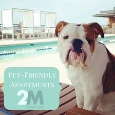 """Emmy of 2M Street Apartments says: """"We're now leasing! Meet me in our private dog park!"""" 