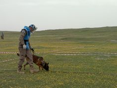Deminer and a bomb detection dog work side-by-side to search for landmines and unexploded ordnances in Tajikistan. Credit: UNDP Tajikistan