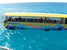 Best Of Cayman By Amphibious Bus & Snorkeling in Grand Cayman #fluffyhero9 #grandcayman