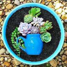 How To Use Succulent Landscape Design For Your Home Succulent Garden Landscape, Plants, Succulents, Miniature Garden, Succulent Terrarium, Succulent Pots, Cactus Arrangement, Succulent Landscaping, Container Gardening