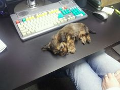 Boss is complaining about the lack of productivity today. I think I know the cause... - Imgur