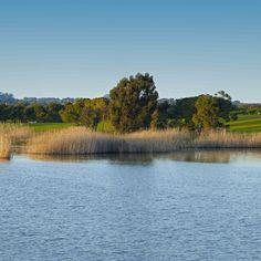 As cores do nosso lago num final de tarde.  #lago #herdadedosgrous #paisagem #sunset #água #verde #azul #alentejo #beja #portugal